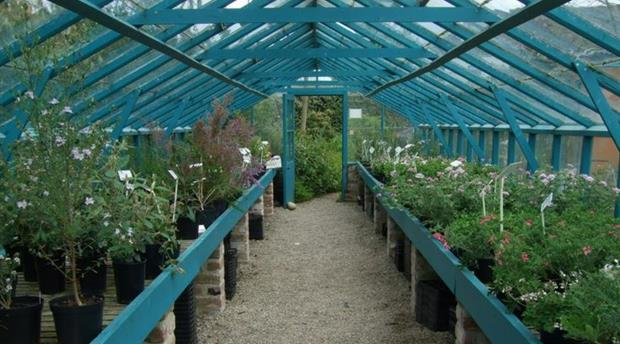 Lower Kenneggy Nurseries Picture 1